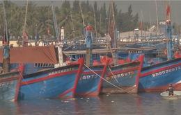 Ngư dân Bình Định ký cam kết không vi phạm lãnh hải