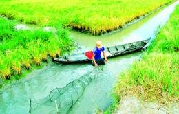 Kiên Giang: Kỷ luật cán bộ sai phạm trong hỗ trợ người dân trồng lúa
