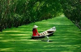 Đến rừng tràm Trà Sư khám phá con đường rừng nổi trên mặt nước
