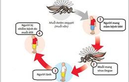 Hướng dẫn phòng tránh bệnh sốt xuất huyết hiệu quả