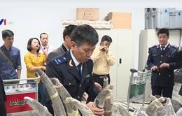 Thu giữ sừng tê giác nhập lậu trị giá hơn 2 triệu USD