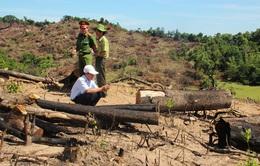 Bắt Tổng Giám đốc chủ mưu phá hơn 60ha rừng ở Bình Định