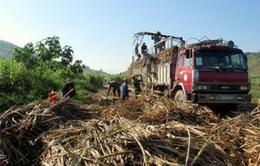"""Phú Yên: Lái xe chở mía """"vòi"""" thêm tiền vận chuyển"""