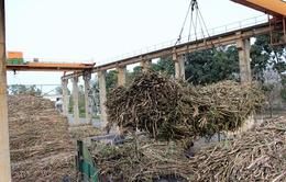 Nhà máy đường Phổ Phong gia hạn 5 ngày thu mua mía