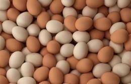 Đức ngừng tiêu thụ trứng nhập khẩu từ Hà Lan