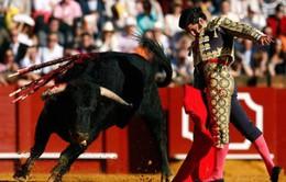 Tây Ban Nha chia rẽ vì lệnh cấm đấu bò