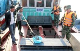 Quảng Ninh bắt vụ vận chuyển 6.000 con cá song không rõ nguồn gốc