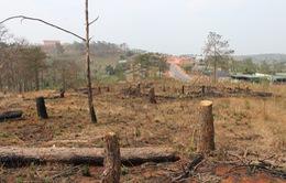 Bộ NN&PTNT ra công điện khẩn ngăn chặn tình trạng phá rừng
