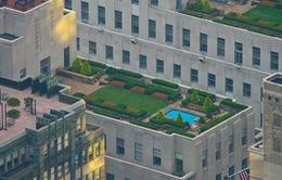 Hà Lan: Vườn cây trên mái nhà giúp hạ nhiệt đô thị