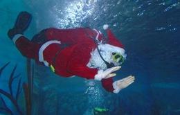 Câu chuyện về những nghề đặc biệt mùa Giáng sinh