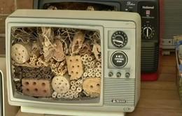 Australia: Biến ti vi cũ thành tổ bảo tồn ong