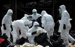Trung Quốc ghi nhận cúm gia cầm H7N9 ở người