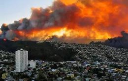 Phát minh trò chơi điện tử từ vụ cháy rừng nghiêm trọng