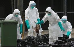 Ghi nhận 3 ca nhiễm cúm A/H7N9 tại tỉnh Cam Túc, Trung Quốc