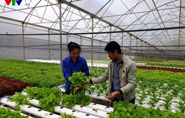Lâm Đồng phát triển hường đi mới - Trồng rau thủy canh