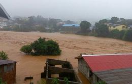 Lo ngại về dịch bệnh đi kèm thiên tai ở Sierra Leone