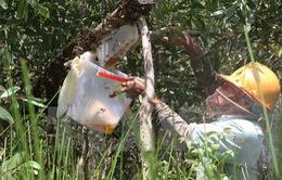 Di dời 220 thùng ''ong lạ'' ra khỏi vùng đệm Vườn quốc gia U Minh Hạ