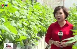 Khám phá phương pháp trồng rau sạch không cần… đất