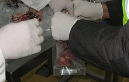 Tây Ban Nha: Bắt giữ 65 người trong vụ bê bối thịt ngựa chấn động