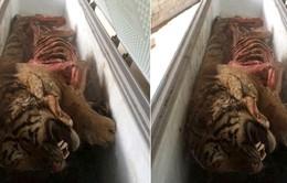 Phát hiện xác 5 cá thể hổ trong tủ đông lạnh tại Nghệ An