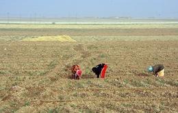Syria chính thức ký Hiệp định Paris về chống biến đổi khí hậu