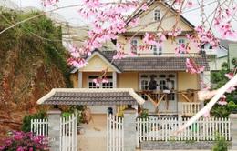 Lâm Đồng hủy lễ hội hoa anh đào
