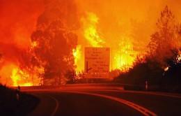 Bộ trưởng Bộ Nội vụ Bồ Đào Nha từ chức sau thảm họa cháy rừng