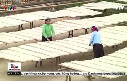 Miến dong Bình Liêu gặp khó vì thiếu thốn nguyên liệu sản xuất