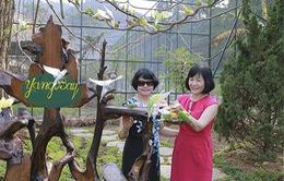 Hàng nghìn cá thể chim tại vườn chim Yang Bay, Khánh Hòa