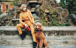 Chi Pu khác lạ với tóc ngắn, ra phố đón xuân cùng cún cưng