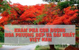Khám phá con đường hoa phượng đẹp và dài nhất Việt Nam
