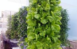 Độc đáo khu vườn 1m2 thu hoạch 40kg rau sạch