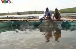 Môi trường nuôi trồng thủy sản tại Thừa Thiên Huế đã khôi phục hoàn toàn