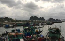 Quảng Ninh chủ động phòng chống bão số 6