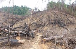 """Nói điều muốn nói: """"Chuyện lạ"""" trong vụ phá rừng Tiên Lãnh…"""