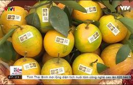 Hấp dẫn Lễ hội cam Cao Phong tại Hòa Bình