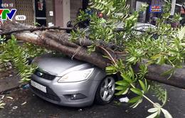 Đà Nẵng: Mưa lớn, cây bật gốc đè nát đầu xe ô tô