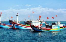 Hoạt động khai thác chế biến hải sản ở Hà Tĩnh hồi sinh mạnh mẽ