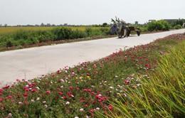 Đặt tên cho đường làng - Cách làm mới ở vùng nông thôn Bình Định