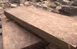 Quảng Trị bắt giữ nhiều phách gỗ khai thác trái phép