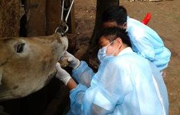 Chính phủ hỗ trợ 3 địa phương phòng chống dịch bệnh gia súc, gia cầm