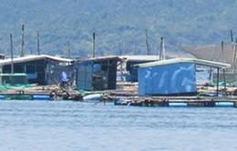 Nỗi lo ô nhiễm môi trường nuôi tôm hùm ở Nam Trung Bộ