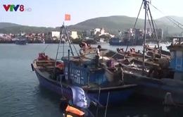 """Nhiều tàu cá ở Quảng Ngãi """"nằm bờ"""" do hư hỏng thiết bị"""