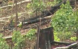 """Rừng Đắk Nông vẫn """"chảy máu"""" mặc cho lệnh đóng cửa rừng"""