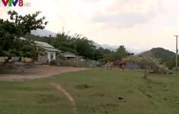 Quảng Nam còn nhiều vướng mắc trong giao đất, giao rừng cho dân