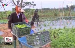 Hiệu quả từ mô hình xen canh rau hữu cơ thuận theo tự nhiên
