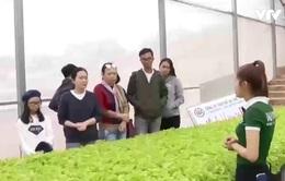 Độc đáo du lịch vườn rau Đà Lạt dịp Tết