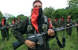 Colombia: Lệnh ngừng bắn tạm thời giữa chính phủ và ELN có hiệu lực