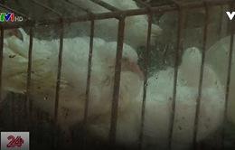 Trung Quốc: Số ca nhiễm cúm A\H7N9 tăng cao nhất trong 4 năm