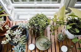 Căn nhà nổi bật với những mảng xanh của cặp đôi yêu thiên nhiên